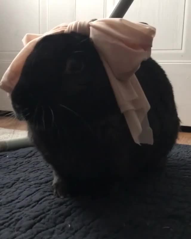 Watch and share Houserabbit GIFs and Bunnies GIFs on Gfycat