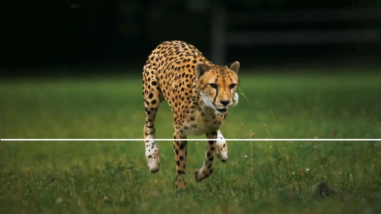 splitdepthgifs, Fast Cat, Slow Motion GIFs