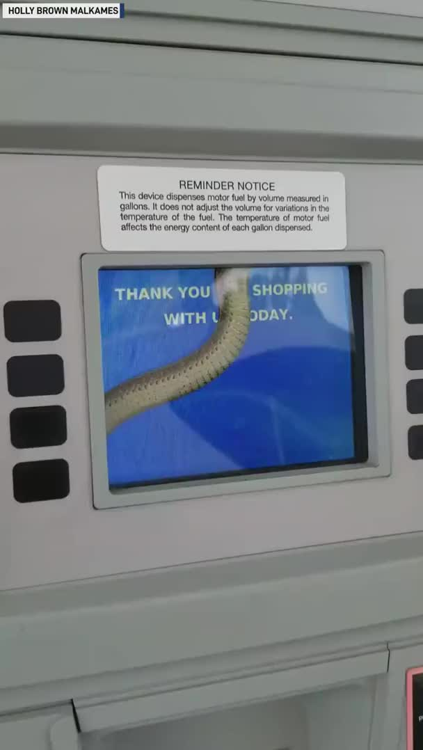 Watch and share Snake In Gas Pump GIFs on Gfycat