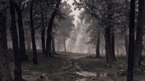 Watch and share Rain In An Oak Forest GIFs on Gfycat