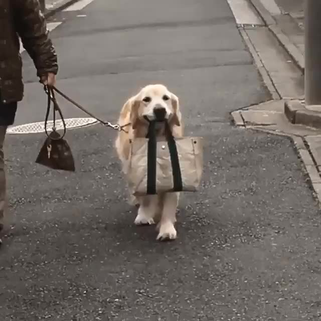 Watch helping carry the groceries GIF by @likkaon on Gfycat. Discover more related GIFs on Gfycat