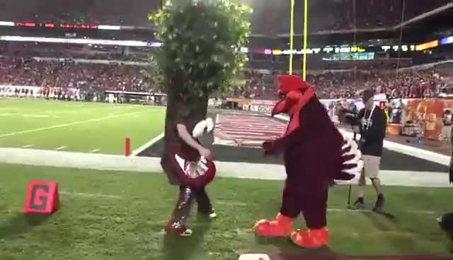 Watch Orange Bowl Smackdown - Stanford Tree vs. Virginia Tech Hokies Mascot - HD GIF on Gfycat. Discover more related GIFs on Gfycat