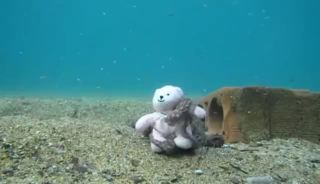 Watch and share Octopus Fell In Love With Teddy! GIFs on Gfycat