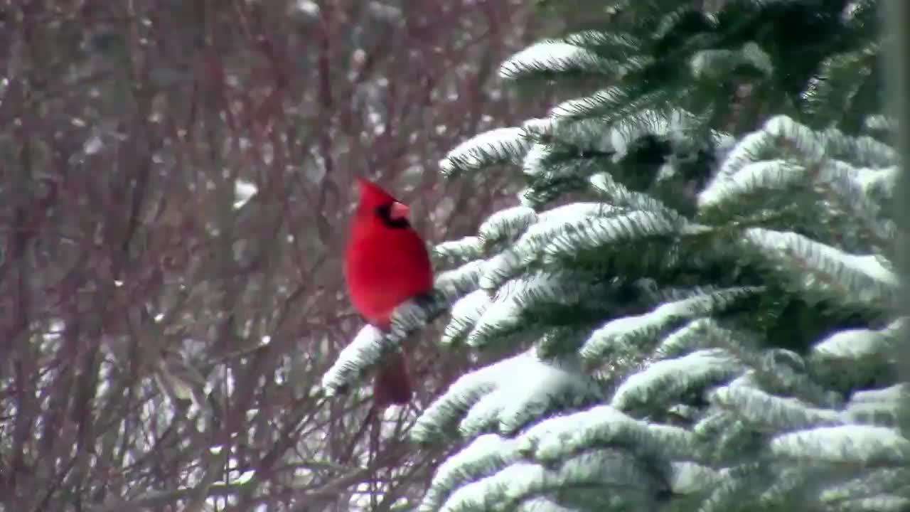 cardinals-hb GIFs