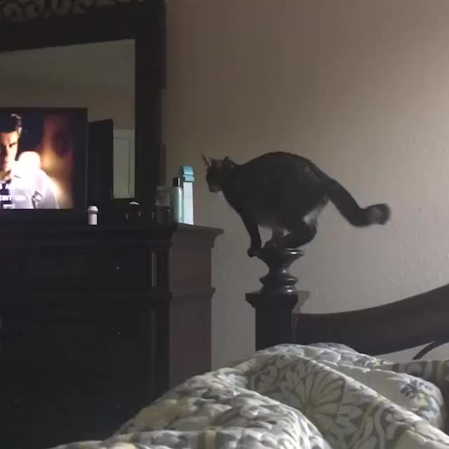 Watch and share [hd] Newsflare - Cat Misses Jump Facebook GIFs by gfylord on Gfycat