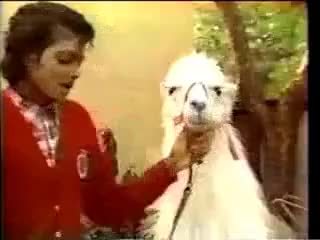 Watch this llama GIF on Gfycat. Discover more Louie, Michael, llama, louie, michael, michael jackson GIFs on Gfycat