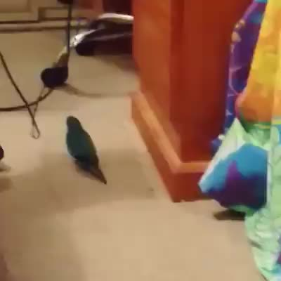 BetterEveryLoop, Birbs, StoppedWorking, Bird does a faceplant (reddit) GIFs