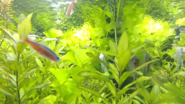 Watch and share Aquarium GIFs by evanbleumer on Gfycat