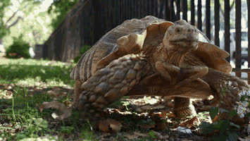slow, turtle, Slow GIFs