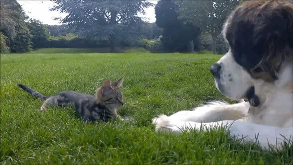Watch bigdog GIF on Gfycat. Discover more aww GIFs on Gfycat