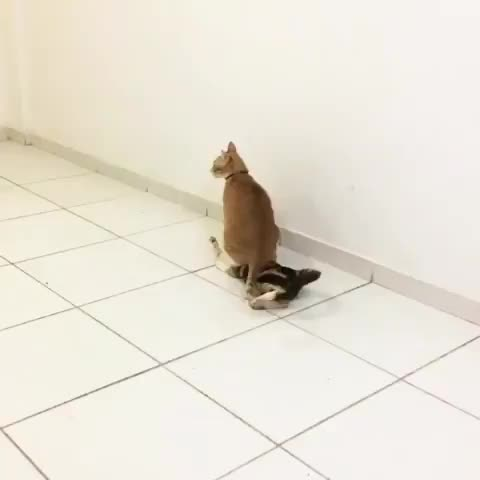 Watch and share Cats GIFs by Slim Jones on Gfycat