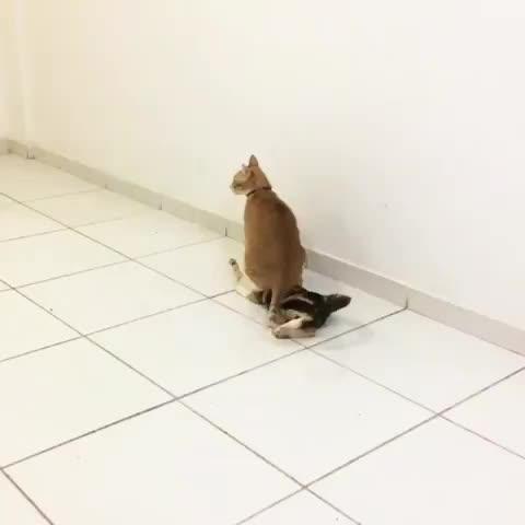 cats, Someone please send halp (reddit) GIFs