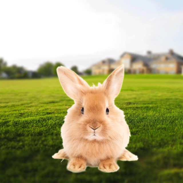 Watch and share BUNNY GIFs on Gfycat