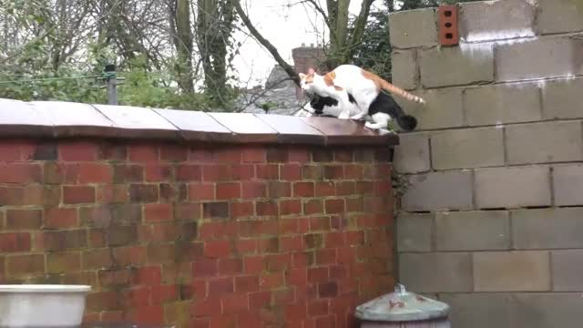 Watch 2 Amazing 'Parkour Cats' Jumping Together In Purrfect Sync Onto Wall - Original GIF on Gfycat. Discover more 4k, Agile, Felines, Ninja, Standing, Trained, VIDEOS, animal, buff, cat, catninja, coordinate, film, high, movie, neko, synchronised, synchronized, weird, wierd GIFs on Gfycat