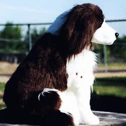 Watch and share English Springer Spaniel Liver GIFs on Gfycat