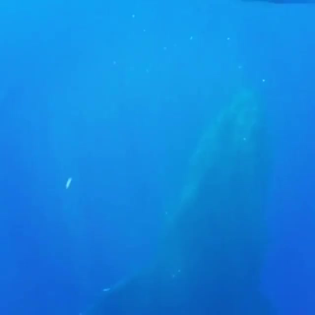 Watch and share Whale GIFs by PM_ME_STEAM_K3YS on Gfycat