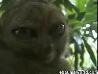 Watch dramatic lemur GIF on Gfycat. Discover more dramatic, lemur GIFs on Gfycat