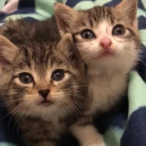 Watch and share Cutekittens GIFs and Goomorning GIFs by notmyproblem on Gfycat