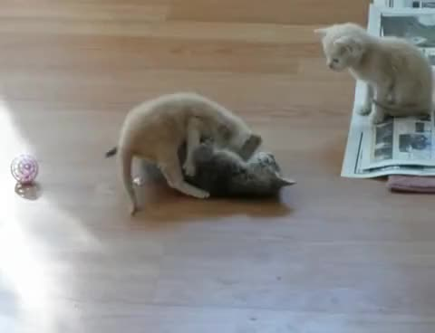 Watch and share Kittens GIFs and Vomit GIFs on Gfycat