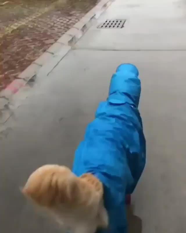 Pupper in his rain gear GIFs