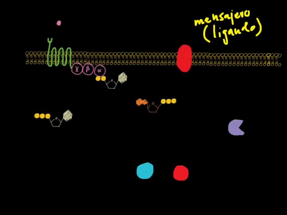 PKA, ampc, gpcr, Receptor Acoplado a Proteína G - Sistema Adenilato Ciclasa - Proteína Cinasa A (PKA) (Primera Parte) GIFs