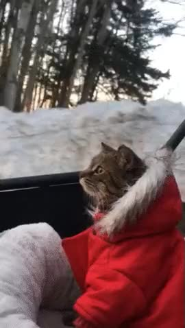 Watch taking the cat for a ride GIF by Aleks0 (@aleks0) on Gfycat. Discover more catgifs GIFs on Gfycat