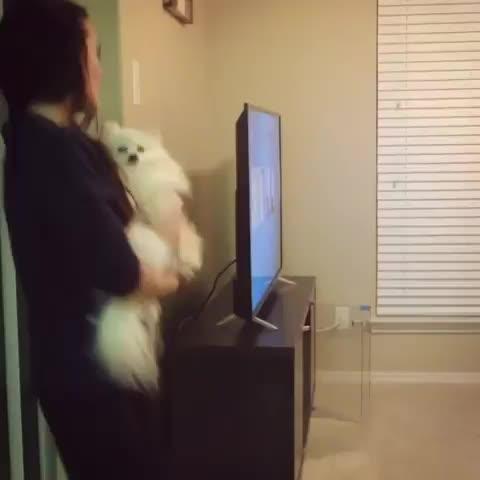 dog, niece waidhofer, Niece Waidhofer and Her Dog GIFs