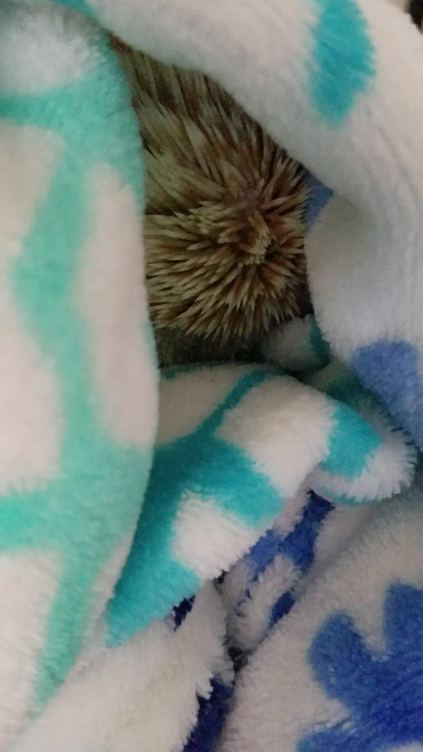 cute, hedgehog, waffles, Hedgehog GIFs