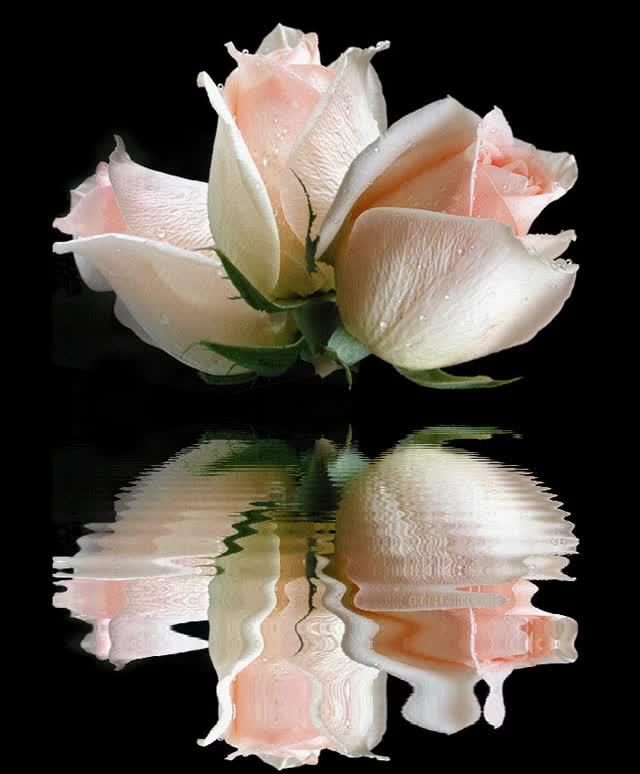 именно фото цветы гифка более