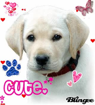 Watch and share Cute Yellow Lab Puppy GIFs on Gfycat