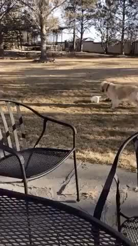 Watch and share These Two Are The Best Of Friends GIFs by HoodieDog on Gfycat