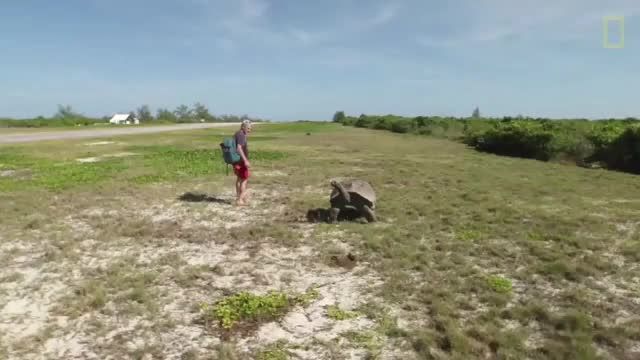 Watch and share Dude Cockblocks A Giant Tortoise And Makes It Chase Him Around An Airport Runway (reddit) GIFs on Gfycat