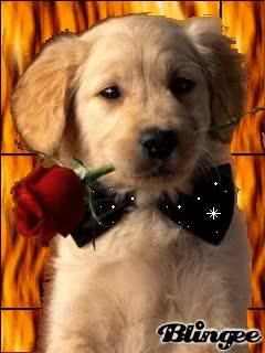 Watch and share Valentine Dog GIFs on Gfycat