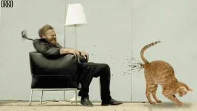 Ryan dunn and the cat shit jet : gifextra GIFs