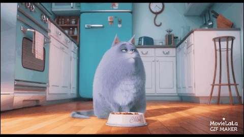 catreactiongifs, funny, movies, The Secret Life of Pets Trailer GIFs