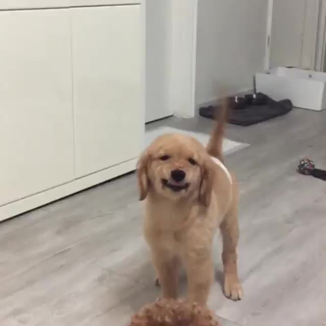 dog, Smiling for the camera GIFs