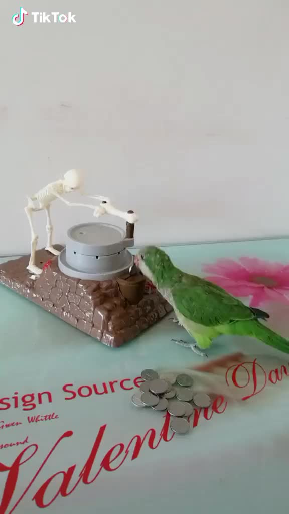 Watch and share An Interesting Toy For This Parrot GIFs by TikTok on Gfycat