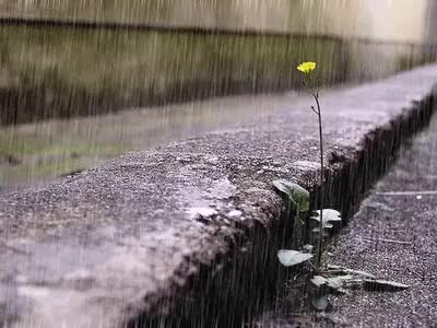 Watch and share Rainy Day GIFs on Gfycat