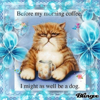 Funny Good Morning Reality Wallpapers Funny Good Morning Cat Gif