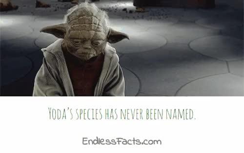 Watch and share Star Wars GIFs and Yoda GIFs on Gfycat
