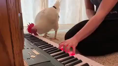 Watch and share Chickenlove GIFs and Chickenmom GIFs by b12ftw on Gfycat
