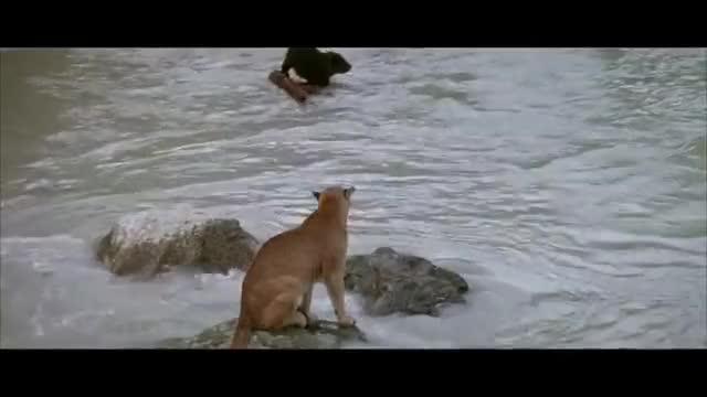 Watch and share The Bear Vs Puma - Beautiful Music Video HD GIFs by 연우 어마어마해 on Gfycat