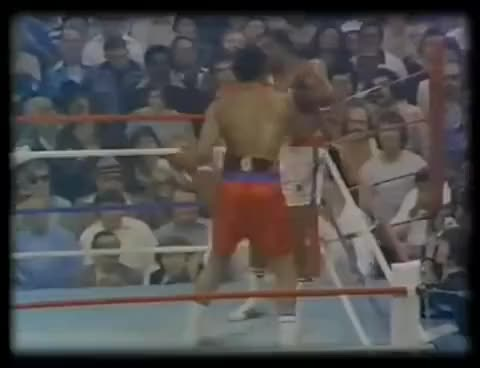 Watch Foreman Lyle KO GIF on Gfycat. Discover more George Foreman Ron Lyle KO GIFs on Gfycat