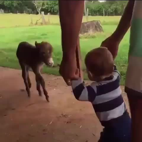 Watch Hug compilation GIF by Boojibs (@boojibs) on Gfycat. Discover more Animals, hugs, cute GIFs on Gfycat