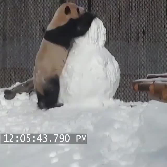 Watch Panda plays with snowman GIF by GB (@gallowboob) on Gfycat. Discover more related GIFs on Gfycat