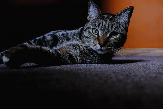 Watch and share Linus GIF GIFs on Gfycat