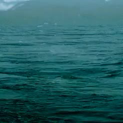 Watch and share National Geographic GIFs and Great White Shark GIFs on Gfycat