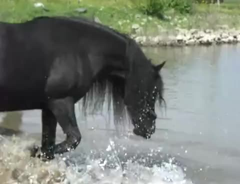 Watch this horse GIF on Gfycat. Discover more horse GIFs on Gfycat