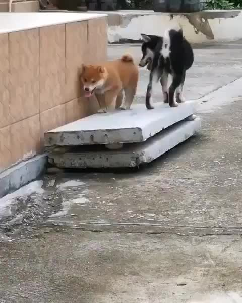 awesome animals 🐶, i can jump too GIFs
