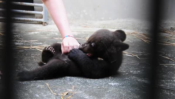 bearcubgifs,  GIFs